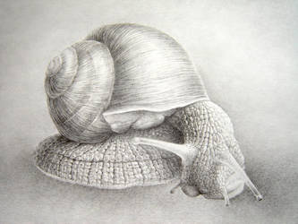 snail by asariamarka
