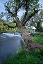 Tree 2 by mvizek