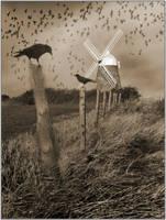 The Birds by EnchantedByDarkness