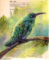 Hummingbird by TrollGirl
