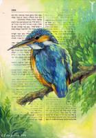 Kingfisher by TrollGirl