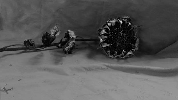 Sunflower Still 5 by Pathfinder174925