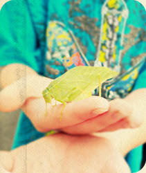 .:katydid.: by yourcharmedlife