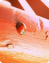 .:lady bug.: by yourcharmedlife