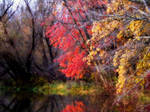Shades of Autumn 15 by MadGardens