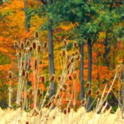 Shades of Autumn 2014.VII by MadGardens