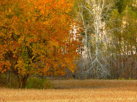 Shades of Autumn 2015, 11 by MadGardens