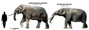 Notiomastodon and  Cuvieronius by Bran-Artworks