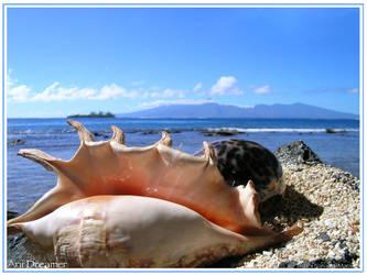 Sea Shells By The Sea Shore by ariiDreamer