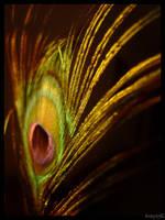 A Feather Of Beauty by Aerohana