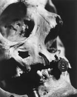 .44 Caliber Skull by UnusualKitsune