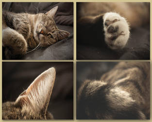 Kitty. by Tirrithx