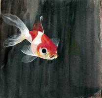 Goldfish by Hatzilla
