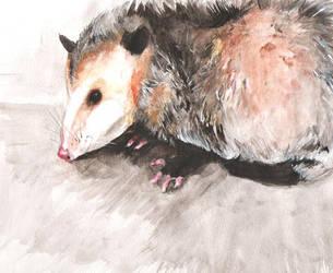 Opossum by Hatzilla