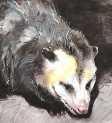 Opossum II by Hatzilla