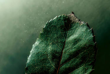 Green Life by Caszs