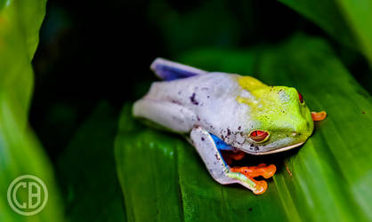 Freaky Frog by Caszs