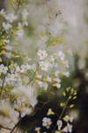 Flowers by ClaudiaFMiranda