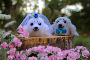 Seal Cake Toppers by LaVolpeCimina