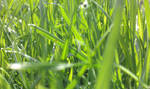 In The Grass by jkund