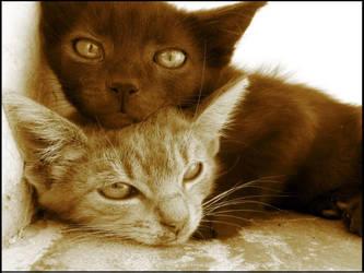 cats by dragosu