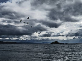 Geese and Island by martinemes