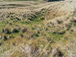 Grasslands 2 by martinemes