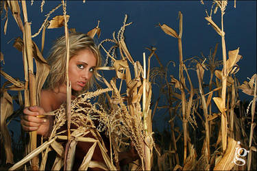 Corn Rows by jakegarn