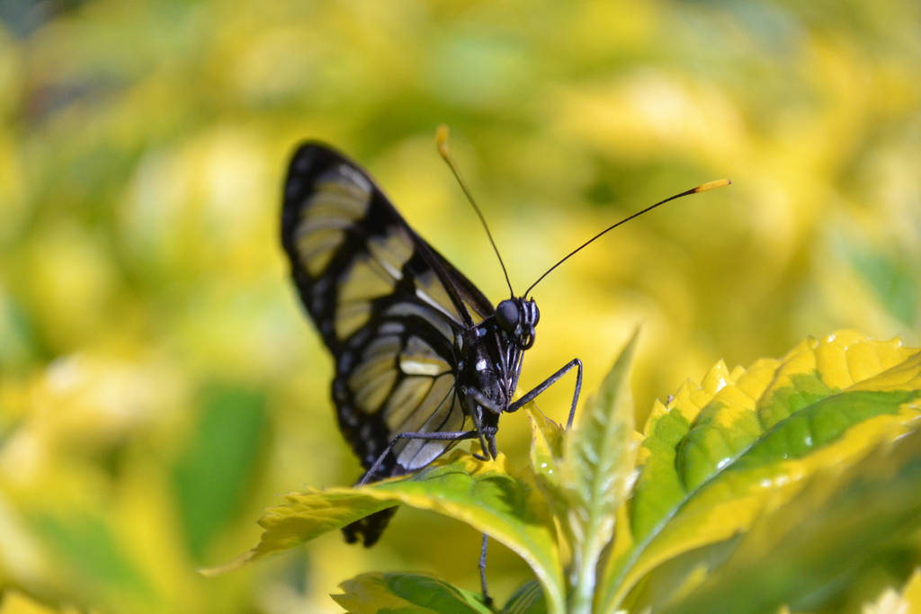 Flying Butter Insect by herzsprung1