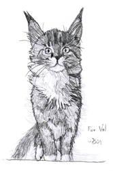 Kitten by Zebbedy42