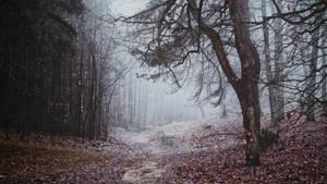 Forest of forgotten past by kriskeleris