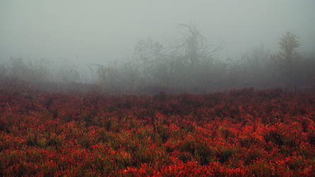 Crimson Meadow by kriskeleris