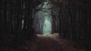 The path you've chosen by kriskeleris