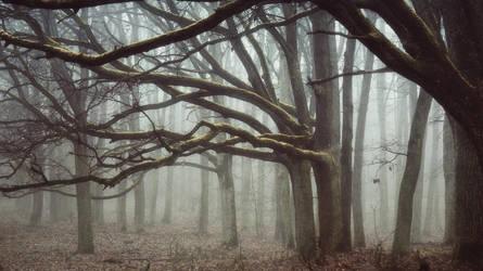 Forest of lost souls II by kriskeleris