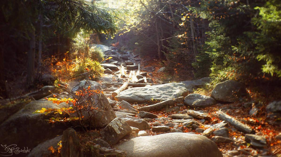 Autumnal illumination by kriskeleris