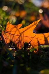 autumn by mastersofdisaster
