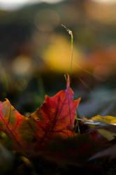 leaf by mastersofdisaster