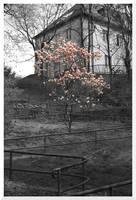 Spring by mdosch