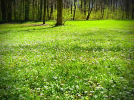 Green meadow by mdosch
