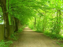 path by mdosch