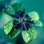 good luck by photoflake