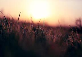 sunrise by photoflake