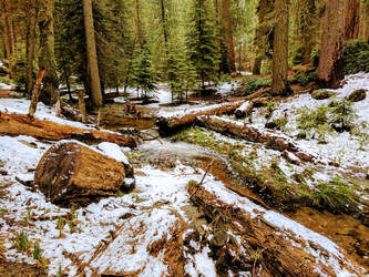 Early summer in Sequoia National Forest by Ahborson