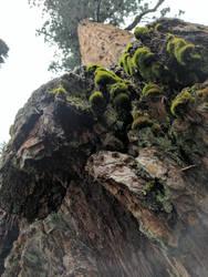 Sequoia Float by Ahborson