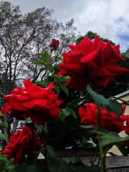 Bloom by Ahborson