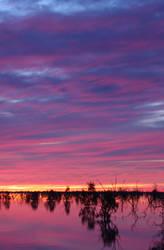 Evening Glory by Ozphotoguy