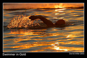 Swimming in Gold by Ozphotoguy