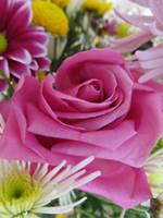 Flowers by xoxosarah94