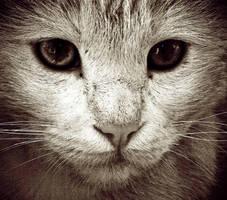 stray cat... by bkurtis