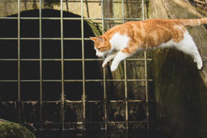 Jumping Cat by Onistocke